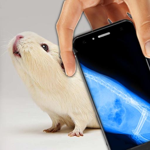 시뮬레이터 X 선 애완 동물 농담 模擬 App LOGO-硬是要APP