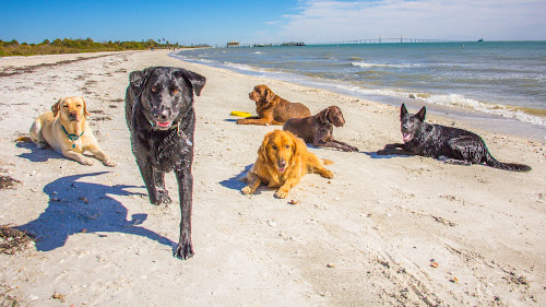 Down by Meaghan Browning - Animals - Dogs Portraits ( water, dogs, beach, group, labrador )