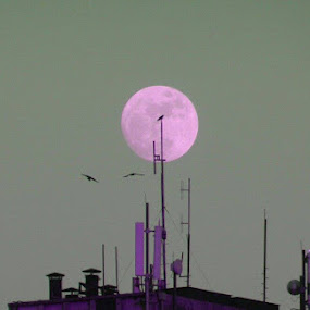 Moon in my Dream by Nat Bolfan-Stosic - Landscapes Starscapes ( moon, sky, purple, dream, town )