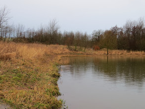 Photo: Priorslee Lake The trimmed reeds at the E end: done by the yacht club as agreed with Severn-Trent. (Ed Wilson)
