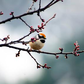 Spring by Tapas Ghosh - Animals Birds