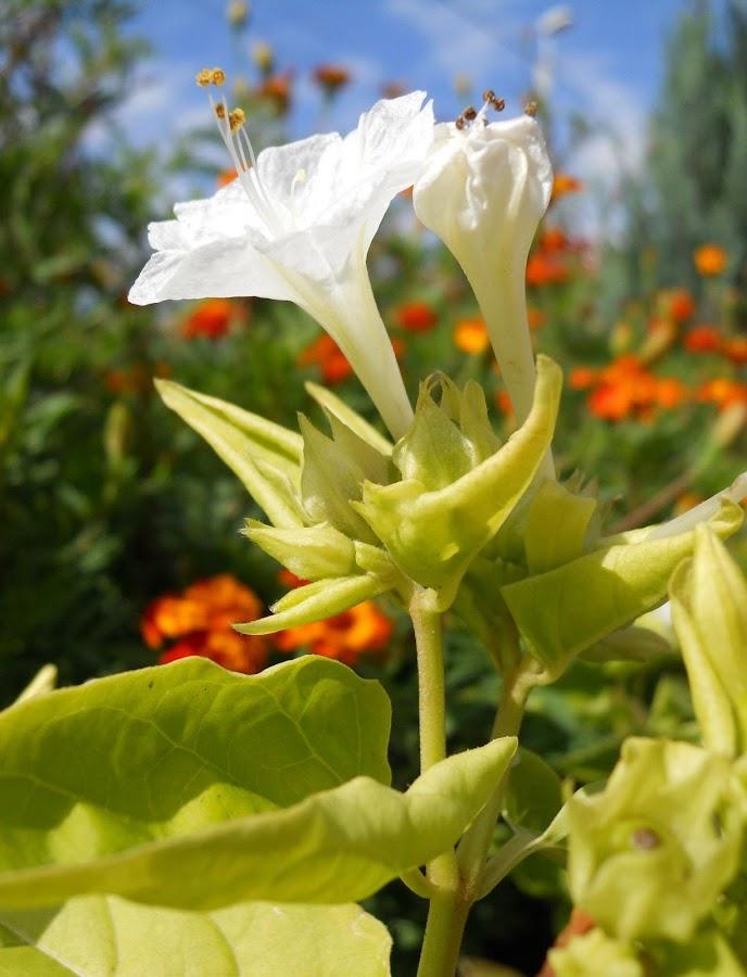 Flower by Oancea Emilian - Nature Up Close Flowers - 2011-2013 ( flower )
