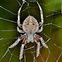spider web wallpapers APK icon