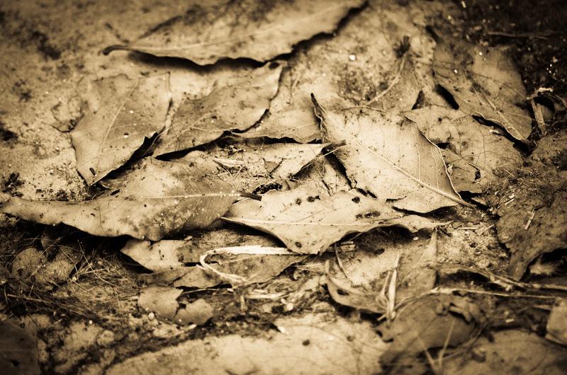 Autunno ai piedi di Massimiliano zompi