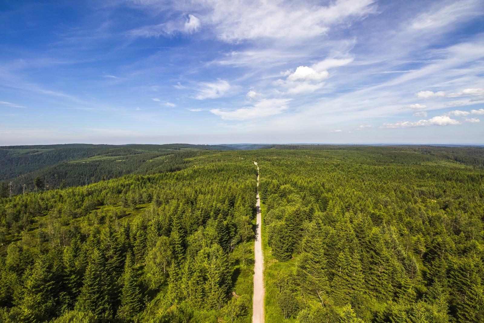 Ein Weg inmitten dichten Waldes führt schnurgerade durch die weit zu überblickende Landschaft