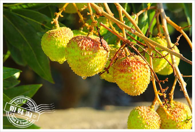 高雄大樹玉荷包老張高品質果物2