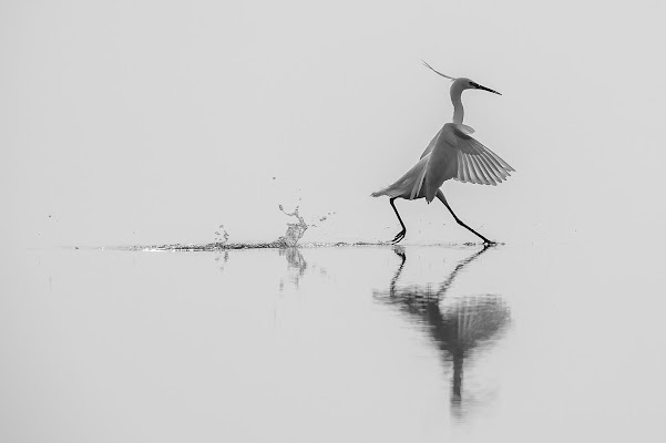 Dancing on the water di Mauro Rossi