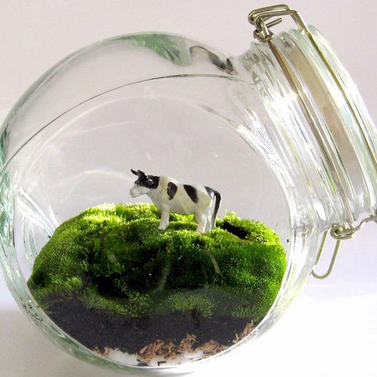 Small Terrarium Jar - Glass Only - 2unit