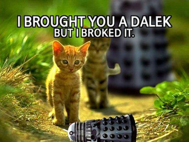 Photo: Daleks and Cats in todays #Caturday +Caturday  Y #twt