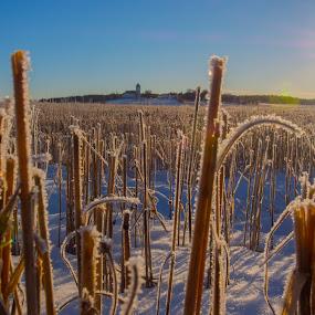 Fields of Norway by Morten Gustavsen - Landscapes Prairies, Meadows & Fields