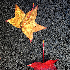 Two Leaves by Geoffrey Wols - Instagram & Mobile iPhone ( fall, leaves, road, autumn, colourful,  )