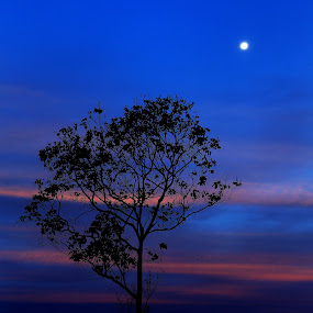 Over the Moon by Adi Krishna - Landscapes Sunsets & Sunrises