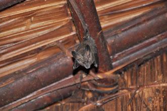 Photo: bat in my hut