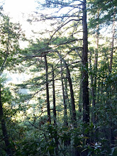 Photo: Snap from the Buzzard's Roost trail at Pfeiffer Big Sur