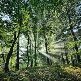 by Nick Vanderperre - Landscapes Forests (  )