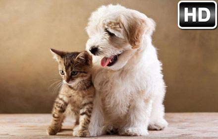 Cats Dogs Wallpaper Hd Cat Vs Dog Themes Chromebeat