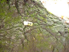 Photo: 伐採予定の木の番号表示