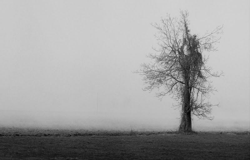 Effimera e impalpabile nebbia di ely50