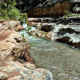 Up Tapeats without a paddle by Haley Johnson - Landscapes Deserts ( adventure, desert, lush, creek, grand canyon )