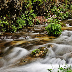 Flowers on the stream by Nicu Buculei - Landscapes Waterscapes ( water, stream, creek, motion, rocks,  )