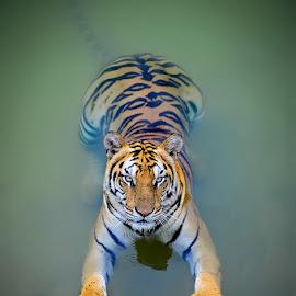 by Roy Rafael - Novices Only Wildlife