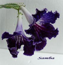 Photo: Samba