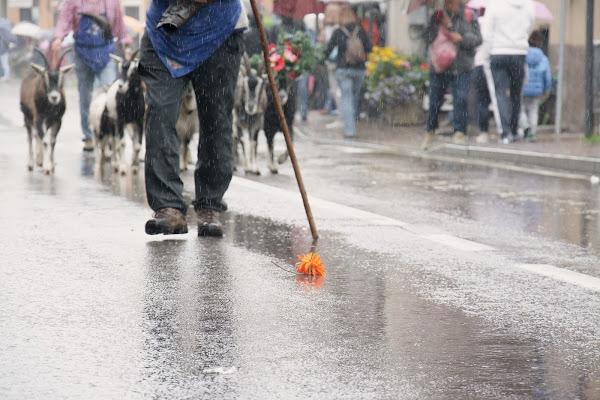 A flower in the rain di vaiolet
