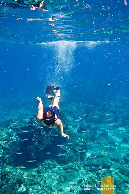 Gili Trawangan Snorkeling Lombok Indonesia