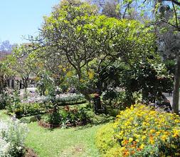 Photo: Funchalin keskustan keväinen puisto