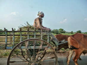 Photo: Going home with his precious partners after day-long hard work. Rices, cottons, corns, onions, sugar canes, and many other crops are on their harvest season in around Amravati, Maharashtra. 28th October updated (日本語はこちら) - http://asksiddhi.in/blog/display/15/view