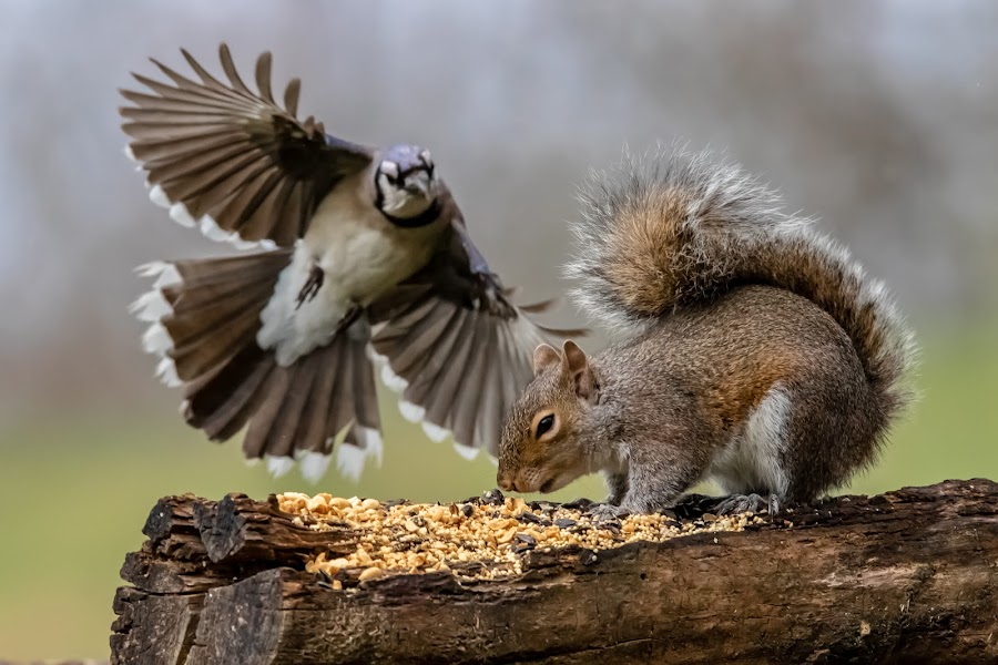 Watch Out! by Mike Craig - Animals Birds
