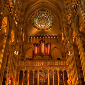 St. Mary's Cathedral by Rick Lombardo - Buildings & Architecture Other Interior