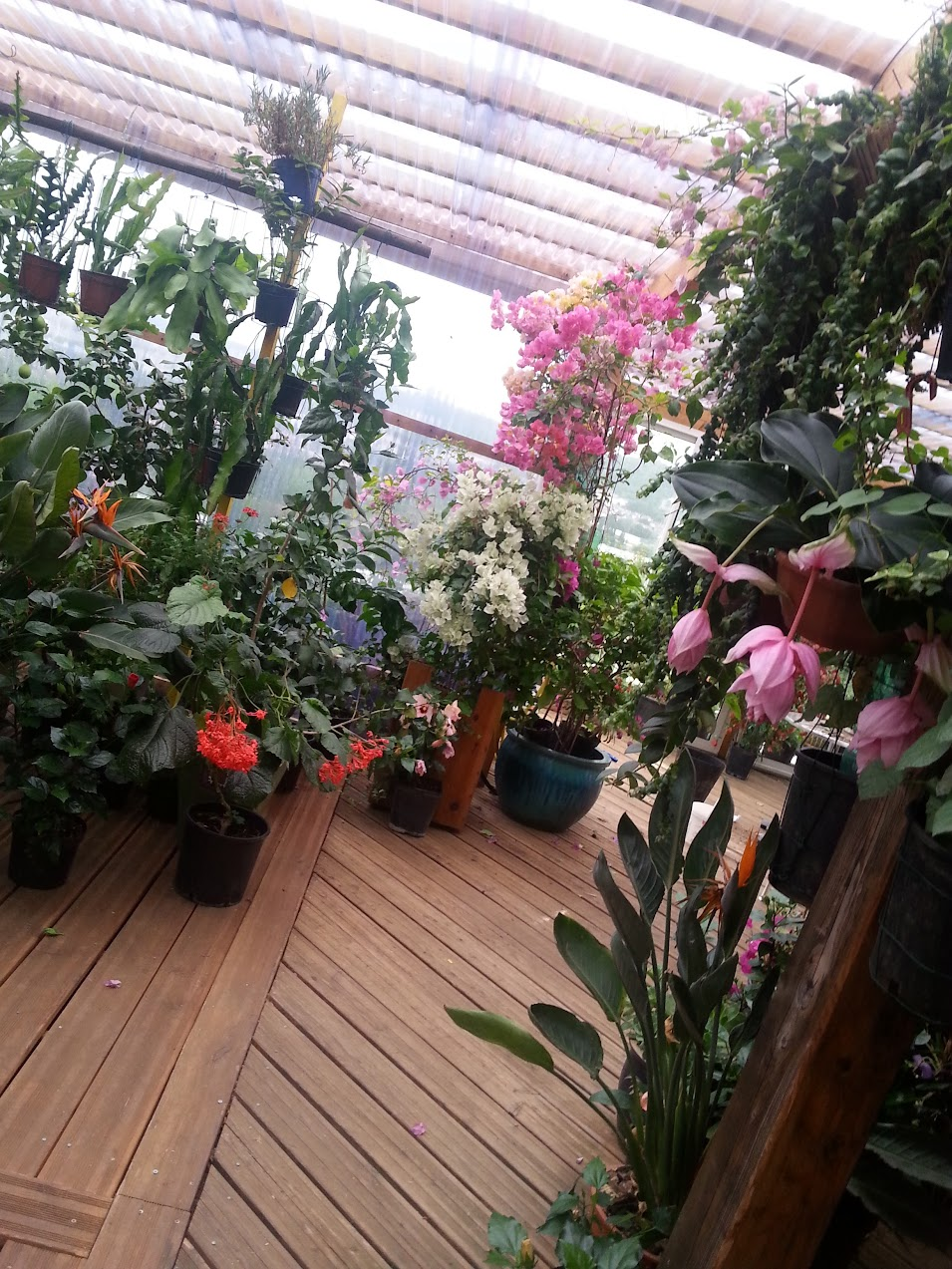 floraisons du mois - Page 26 LNHXcDGJvYzCA3OIrKXA_oHhJUiUmsVf1pmjaCDJfh3H=w955-h1273-no