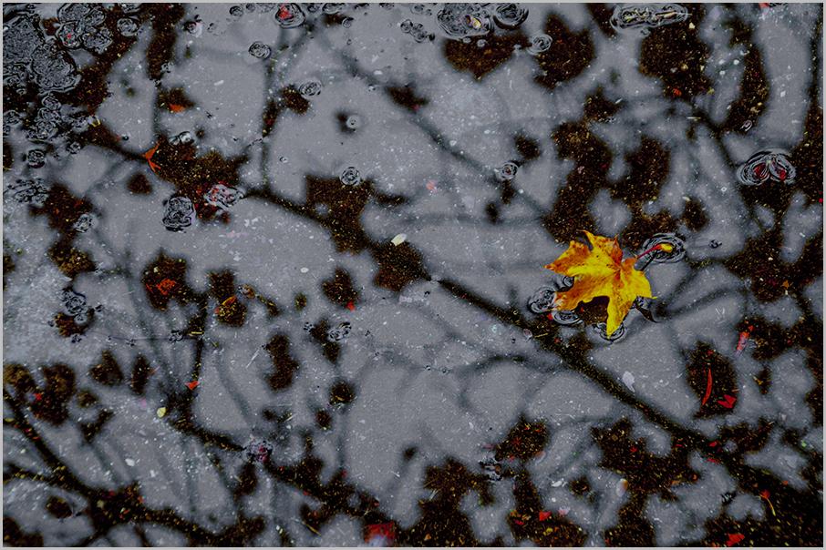 Pozzanghera d'autunno di Pietro Forti