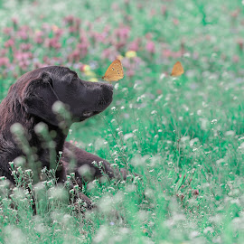 dog and butterfly by Dragana Trajkovic - Animals - Dogs Playing ( nature, grass, butterfly, animal, playing, dog,  )