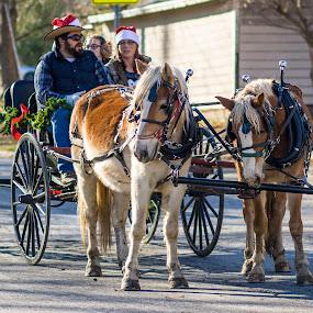 by Jackie Eatinger - Public Holidays Christmas ( lawrence, parade, horses,  )