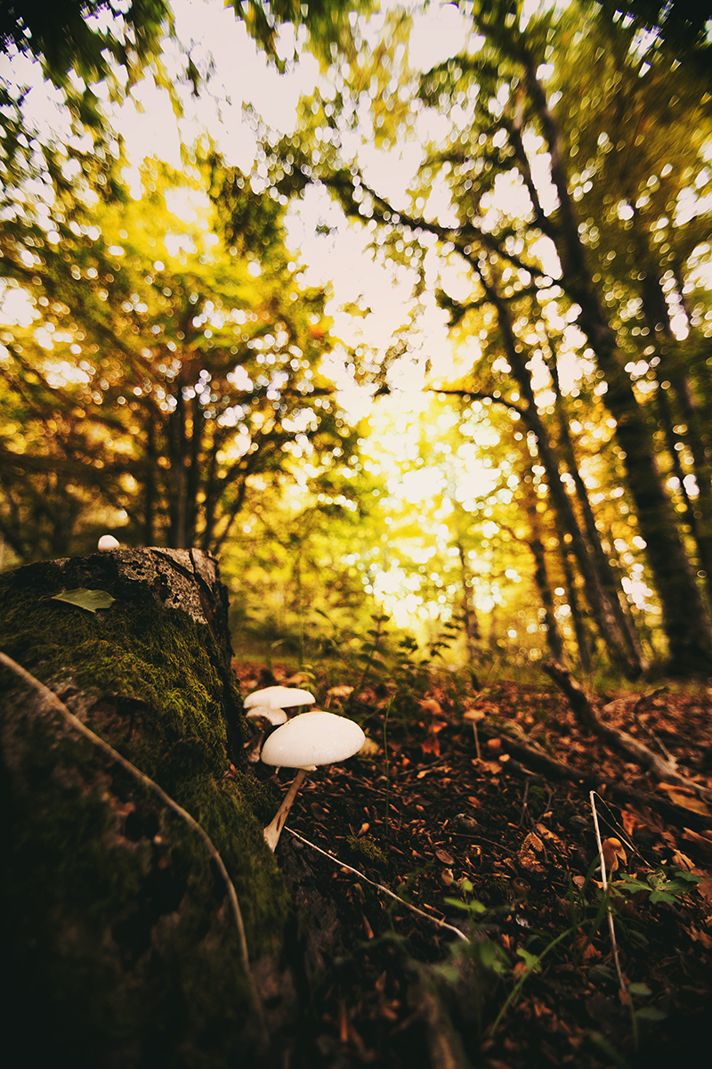 Bosco d'autunno di Matteo90