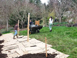 Photo: food forest gets some help from the tractor