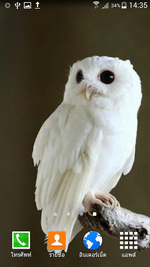 секс знакомства белая сова с фото