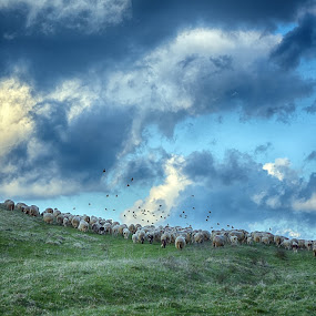 Green For Sheep by Marco Bertamé - Landscapes Prairies, Meadows & Fields ( many, clouds, blue, green, cloudy, sheep, grey, flock, crowded,  )