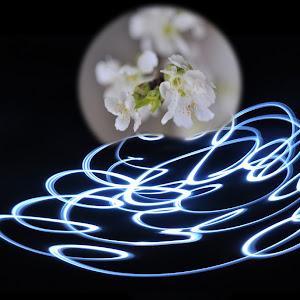 F:\fotografie\lightpainting met bloem.jpg