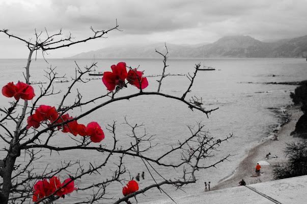 Sfumature di rosso e grigio... di Salvatore Massaiu