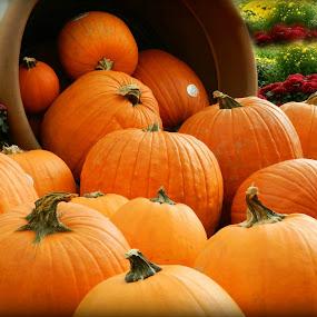 Pumpkins by Karen Carter Goforth - Uncategorized All Uncategorized ( orange, pumpkins,  )