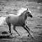 horse-3982.jpg