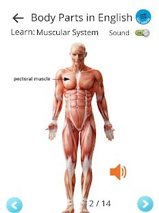 Learn Body Parts in English- screenshot thumbnail