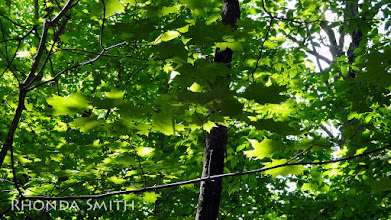 Photo: More light over the leaves - those are pretty cool for me to see, so different. :) Makes everything kind of glow.