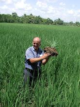 Photo: Luis Romero holding SRI plant
