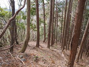 植林になり藪がなくなる