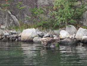 Photo: Hauled-out seals