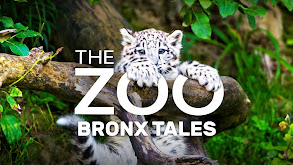 The Zoo: Bronx Tales thumbnail